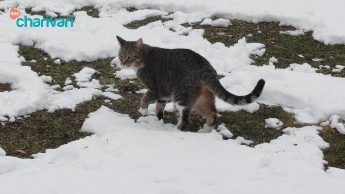 Hilfe - Katze gesucht!