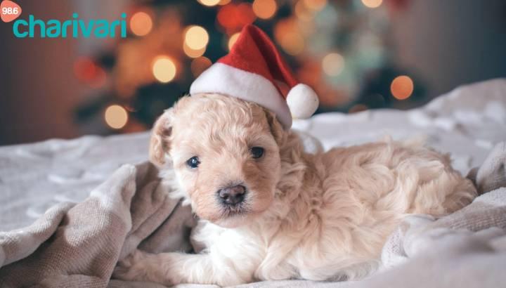 Kleiner, süßer Weihnachtsgeschenk-Tipp!