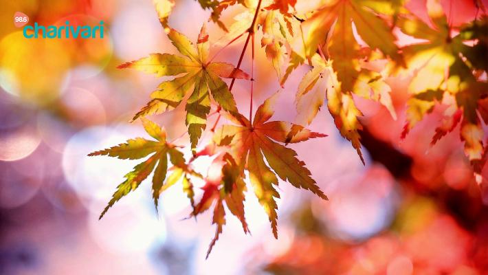 Unsere Herbst-Highlights - das dürft ihr nicht verpassen!