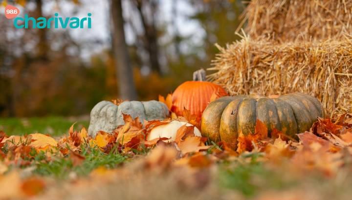 Unsere Tipps und Tricks für den Herbst